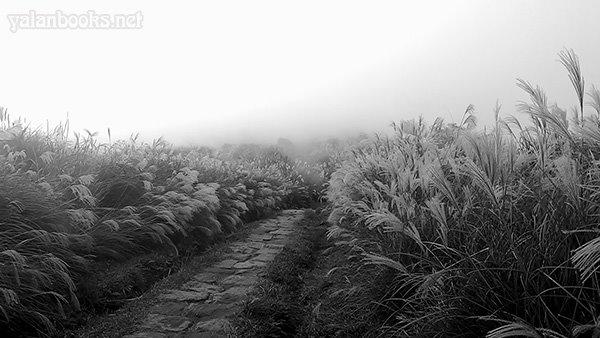 Taipei Travel Silvergrass Yangmingshan photography Romanticism 台北旅行 阳明山 秋芒 风光摄影 浪漫主义 Yalan雅岚 黑摄会